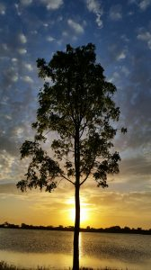 Florida West Boca Raton Sunset Tree